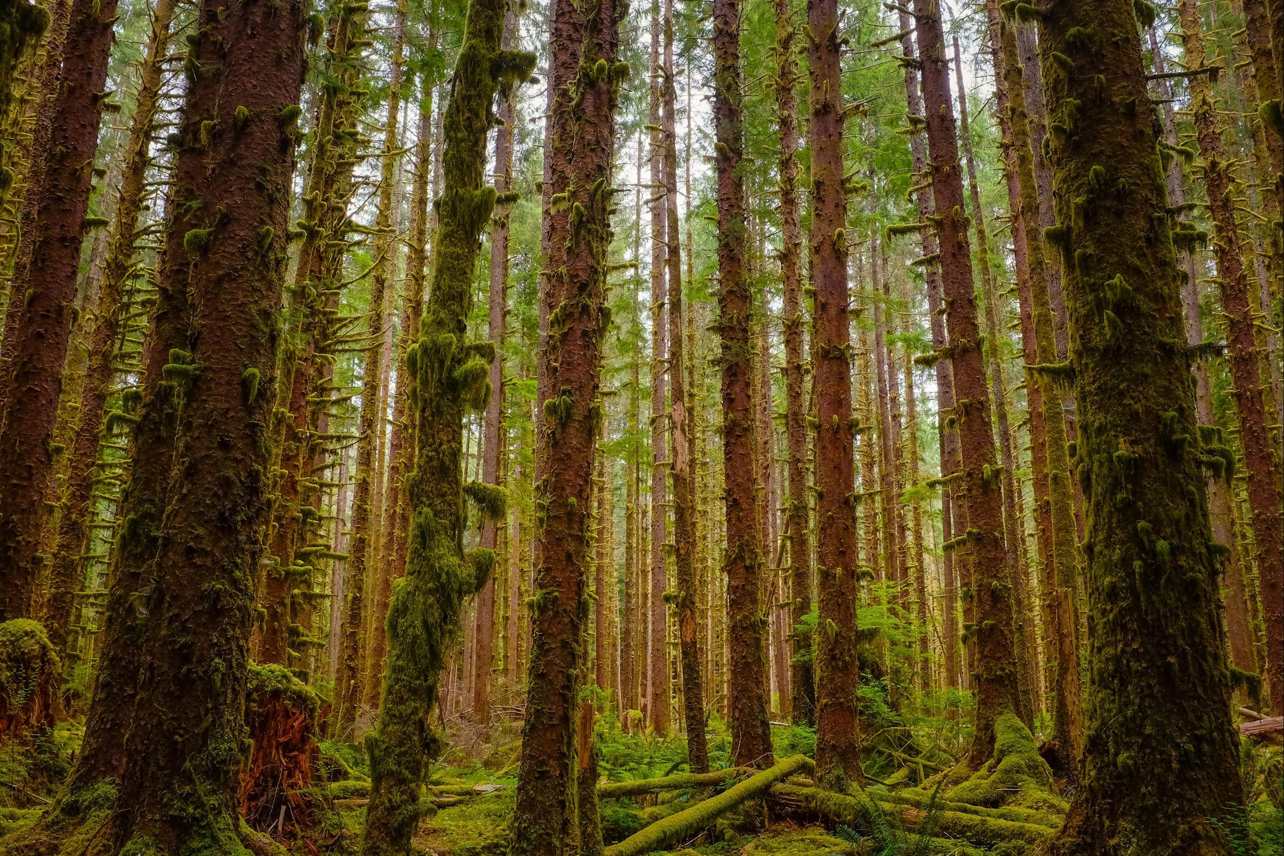 Hike Mount Greylock